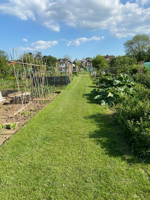 Photograph of church road allotments