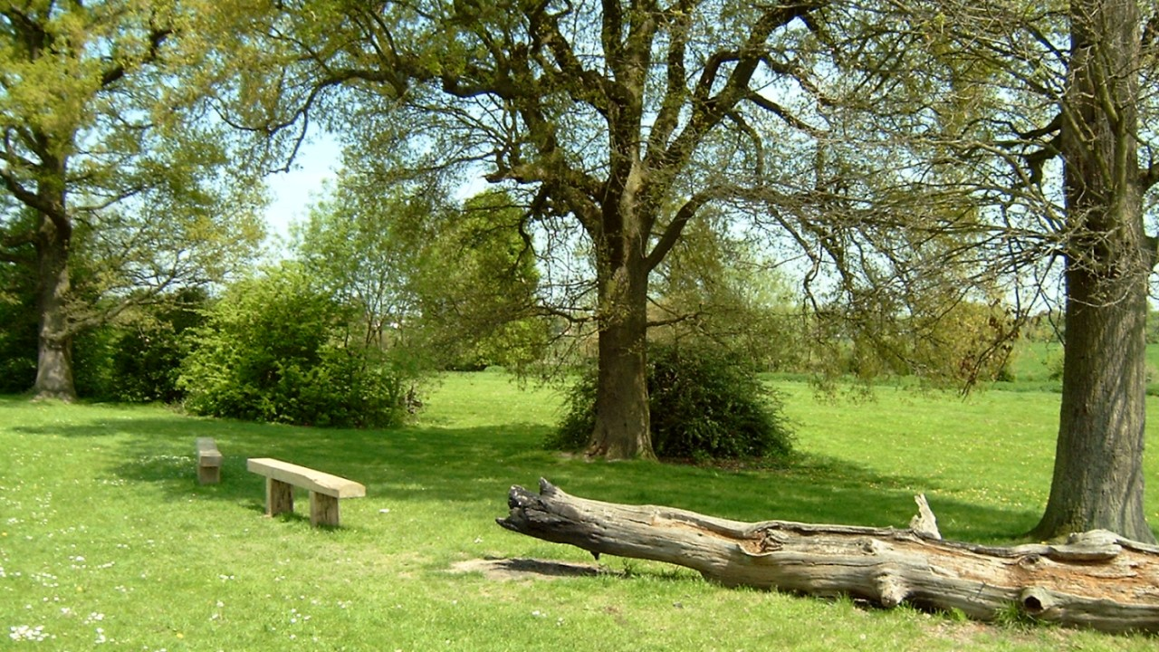 Photo of a bench under some trees at Emlyn Meadows
