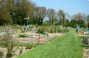 Photo of the Langshott Allotments